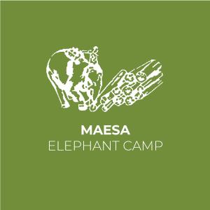 logo ปางช้างแม่สา