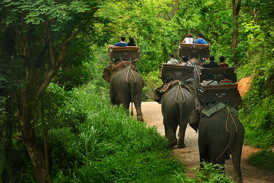 Elephant Riding 25 Minutes Ticket – Discount –FaceTicket ♡