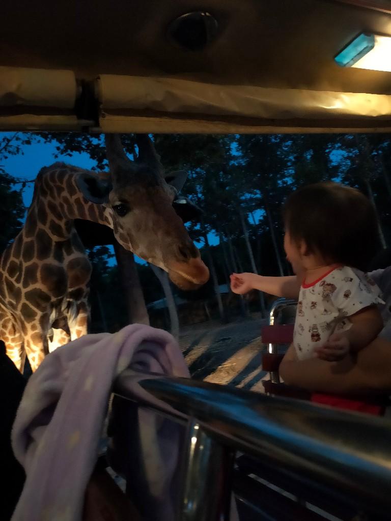 เปนการพาลูกไปเที่ยวดูสัตว์ครั้งแรกคะ ลูกชอบมากได้ไกล้ชิดกับสัตว์