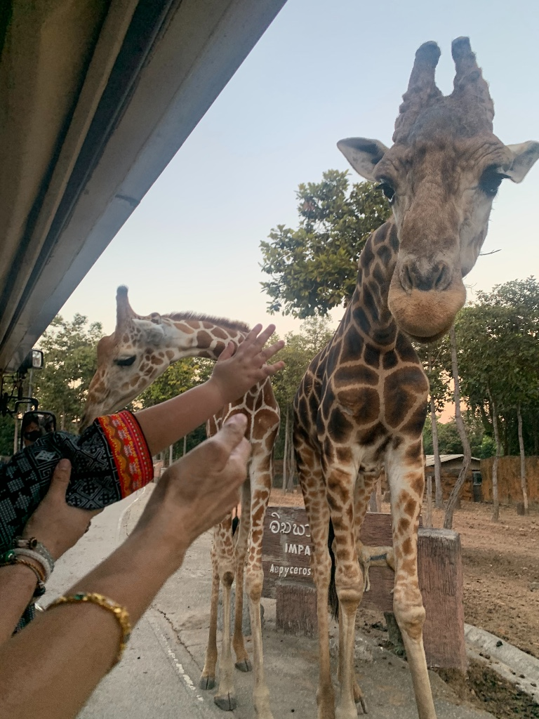 We can be close to Giraffes and the animals here look healthy and taking care of. The shows are wonderful and very creative especially the last one. We like everything's very much.